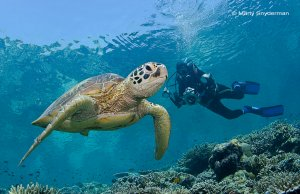 green sea turtle and a photographer
